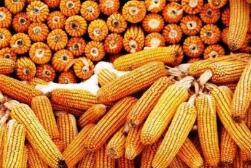 农业银行大力支持制造业高质量发展