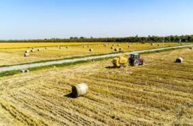 农业农村部:实施打好种业翻身仗行动方案