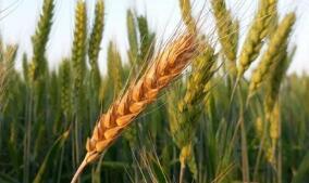 国家统计局:前三季度,农业(种植业)增加值同比增长3.4%